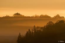 Goldenes Licht im Nebel