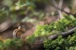 Streifenhörnchenparadies