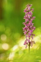 Bezaubernde Blütenpracht