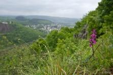 Orchidee mit Ausblick