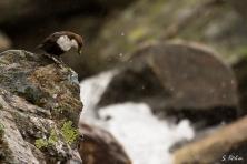 Ein vorsichtiger Blick zum Nest