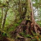 pacific-rim-national-park-reserve1