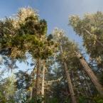 pacific-rim-national-park-reserve3