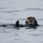 seeotter5