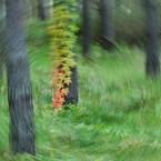 Drehwischer Herbst