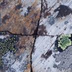 Geometrische Strukturen im Stein