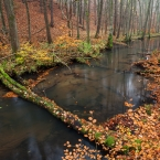 Schlaubetal im Herbst